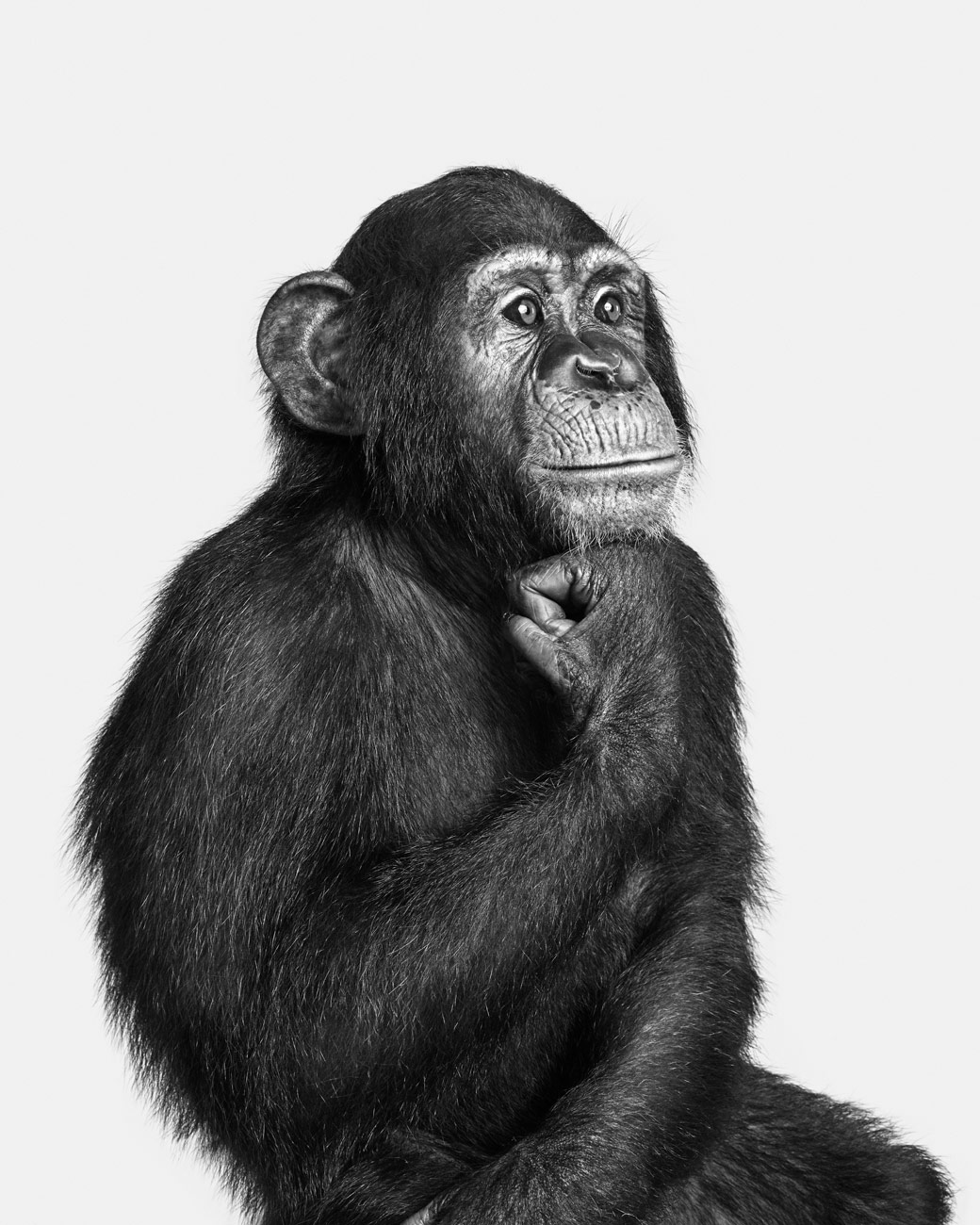 Chimp_01_BW