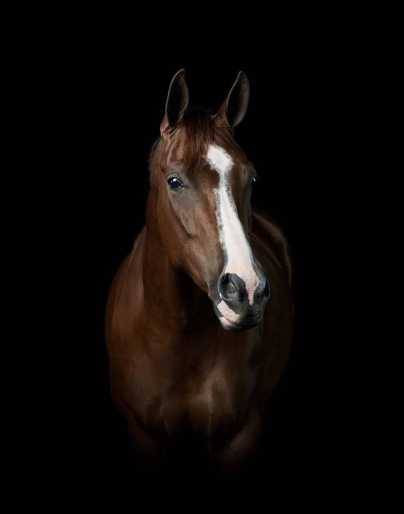 Purina-Ford-QuarterHorse2-0837-1